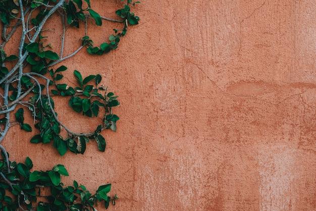 木の枝と古いセメント漆喰壁の緑の葉。