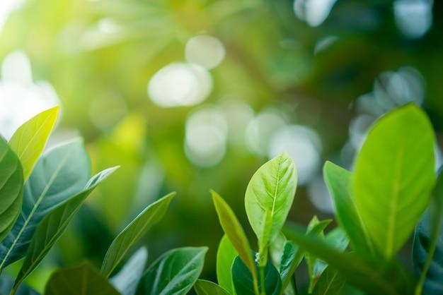 Свежие зеленые листья на фоне размытой зелени. натуральные зеленые листья боке. выборочный фокус.