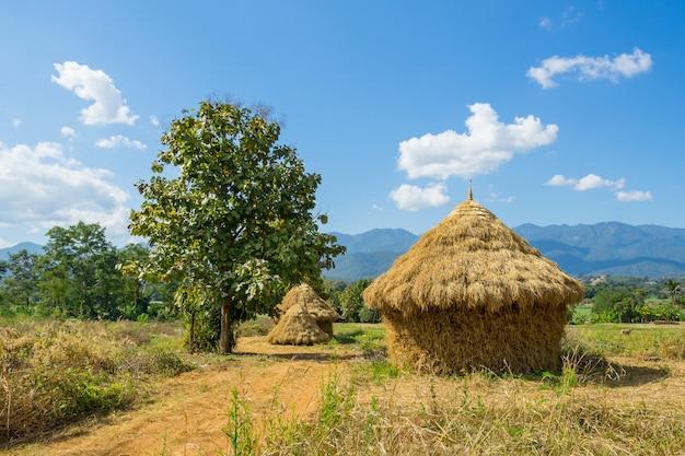 藁の収穫はタイのパイにあるコテージのようです