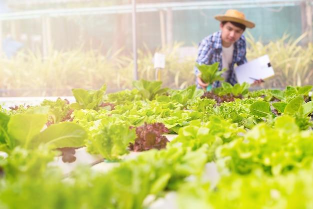 農家は有機的に成長した野菜の品質をチェックしています。