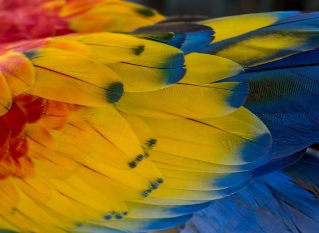 スカーレットコンゴウインコの羽