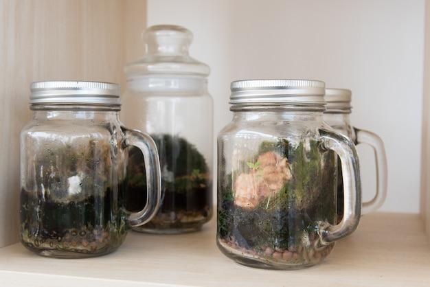 テラリウム、趣味や家の装飾のためにガラス容器の中に多くの小さな植物の成長。以下のために与えます