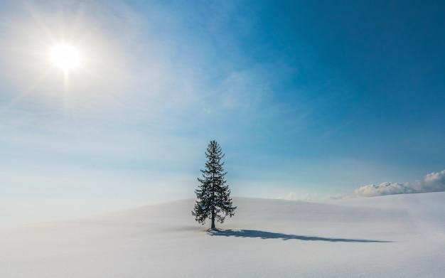 北海道美瑛の雪丘