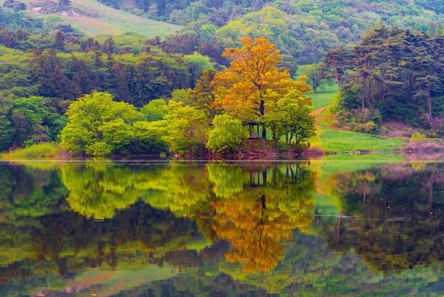韓国忠清南道西山の永美湖で春の緑の湖