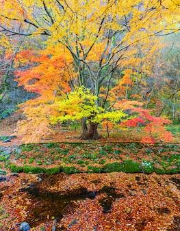 Осень в национальном парке наджангсан, южная корея