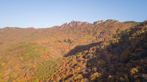 秋の韓国の森