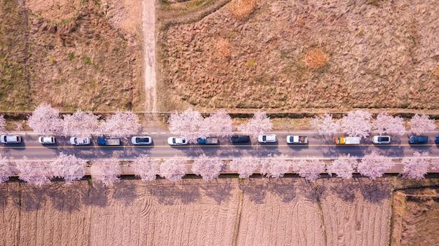 韓国の桜道の平面図