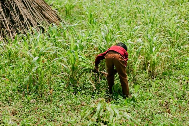 Хмонг группа детей, горная местность ха гианг, вьетнам.