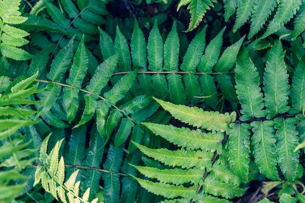Свежая весна большой зеленый лист папоротника в лесу и капли воды