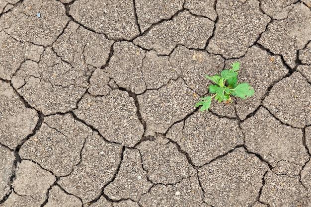 ひび割れ土の質感の間の小さな植物の成長
