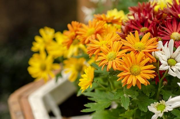 黄色の花びらは、背景パターンがぼやけています。