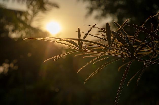 夕日の背景、パターン、ぼかしのシルエット