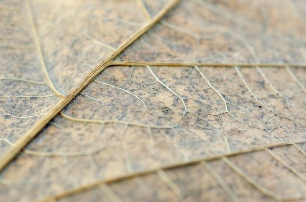 ぼやけたパターンの背景を持つ乾燥葉パターン