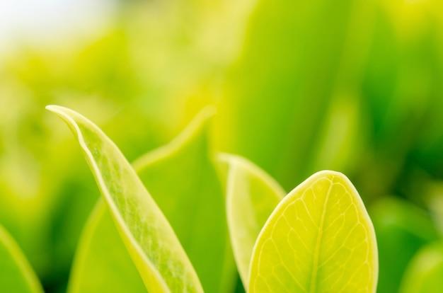 ぼやけたパターンの背景を持つ緑の葉