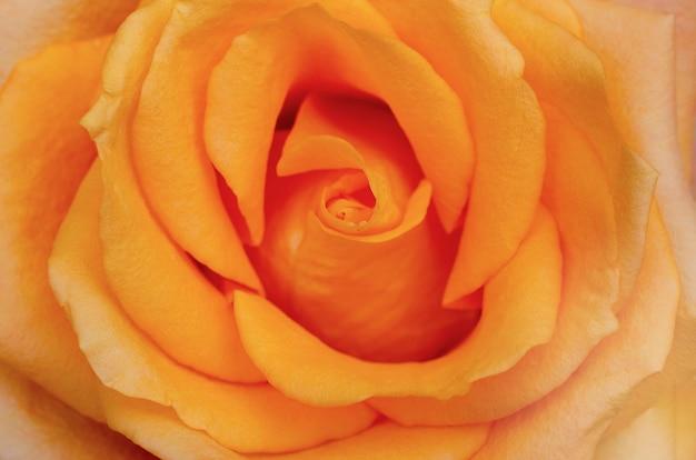ぼやけたパターンの背景を持つオレンジ色のバラ
