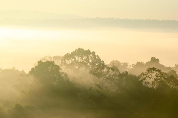 朝の空とぼやけたパターンの背景を持つ国立公園の森の山々
