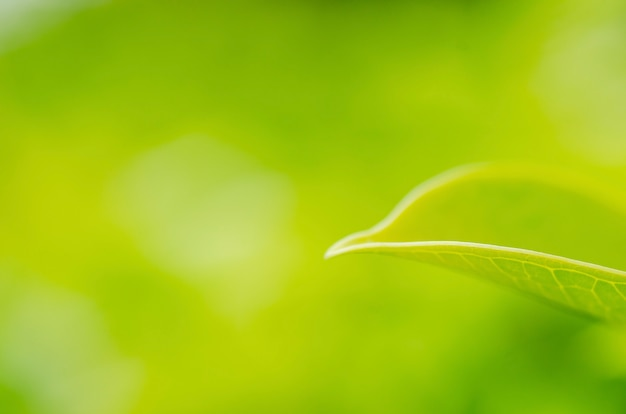 ぼやけたパターンの背景を持つぼやけた緑の葉