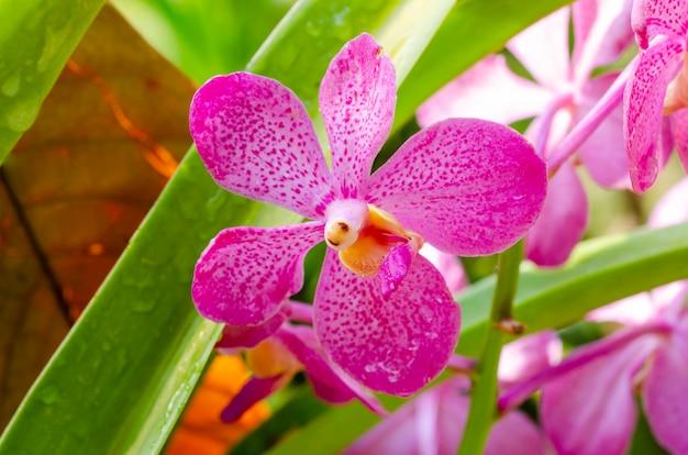 ぼやけた紫色の花