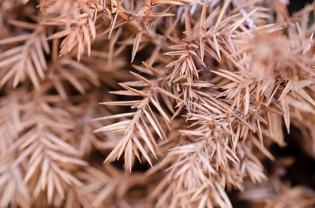 Коричневые размытые сухие листья имеют размытый узорчатый фон.