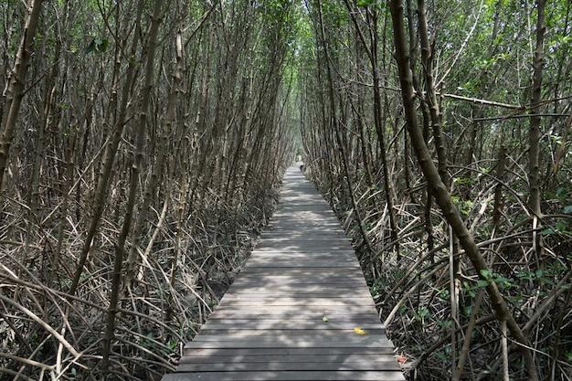 タイの湾で自然の中で木の板の散歩道