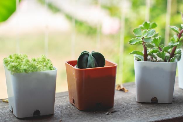 Небольшие растения, выращенные в горшках для украшения