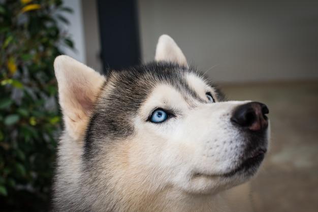 犬の青い目に閉じて