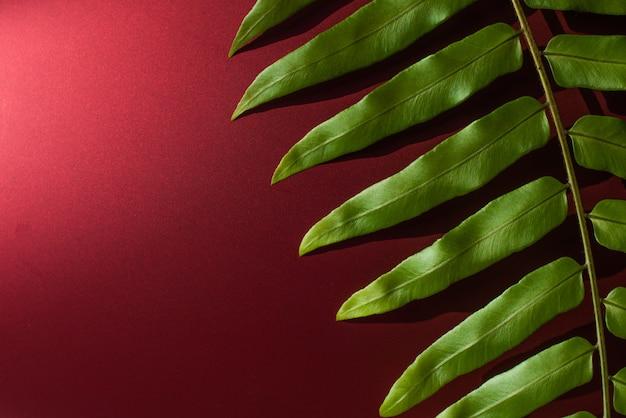 Зеленый лист на красном фоне - изображение