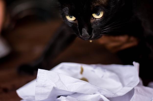滅菌および手術滅菌における麻酔下の猫手術の眼。