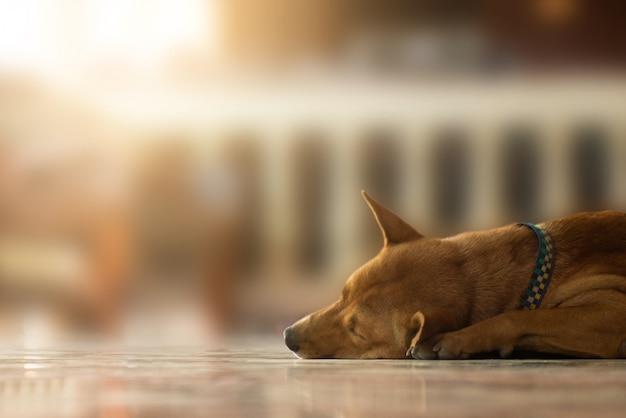 光で床に寝ている放棄されたホームレスの犬