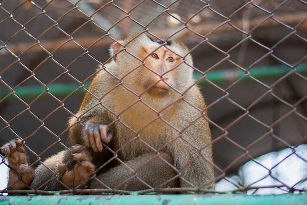 動物園でケージにぶら下がっている小さな猿
