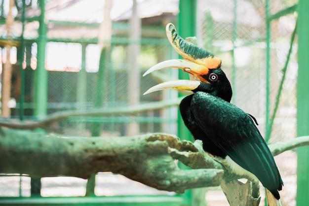 Большая птица-носорог. животное, птица в зоопарке, вольер.