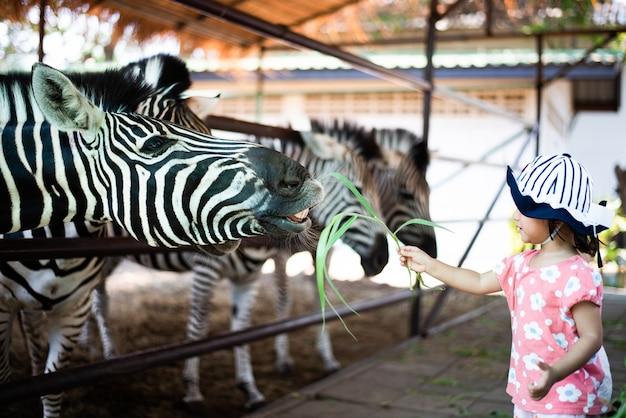 Маленький ребенок кормит зебру в зоопарке