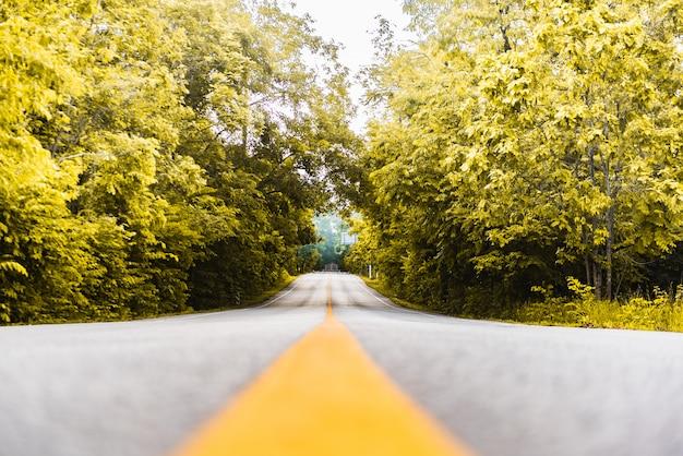 Асфальтовая дорога с желтой линией и лесной фон