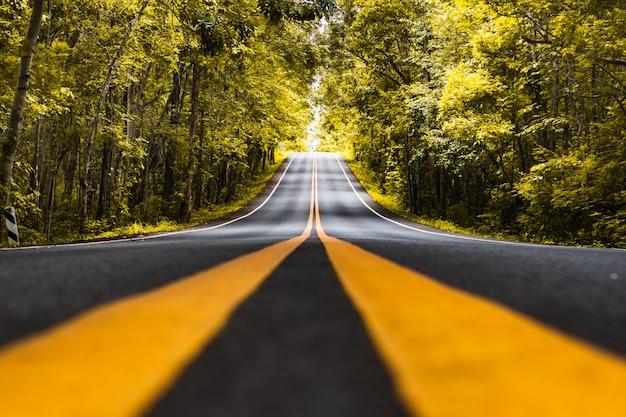 Асфальтовая дорога с желтой подводной линией возле леса