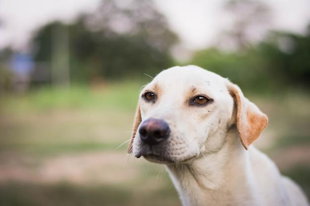 緑の草の上に座って負傷した犬