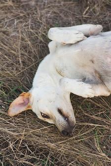 乾燥した草の上に寝ている