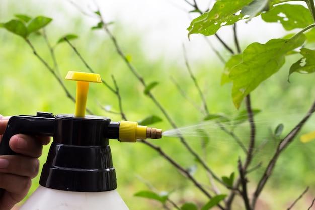 人々は木に殺虫剤を噴霧している。