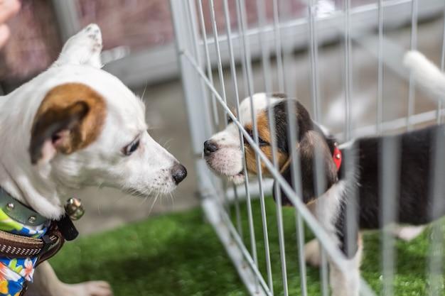 子犬はペットショップで犬のケージで待つ自由に願って