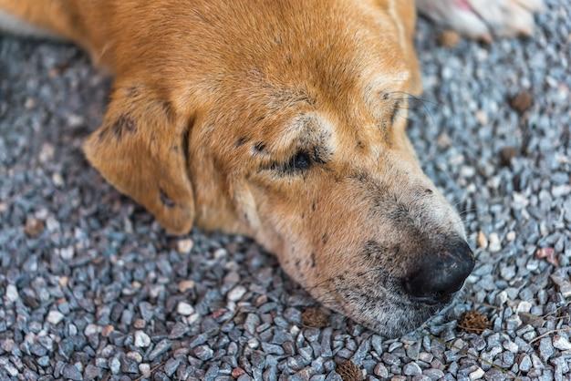 Тайская коричневая бездомная собака спит с одинокой и мисс