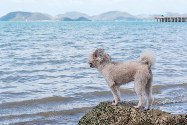 海で旅行するときの岩のビーチで犬の幸せな楽しみ