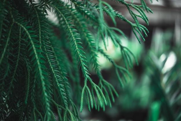Папоротник в природной среде зелени