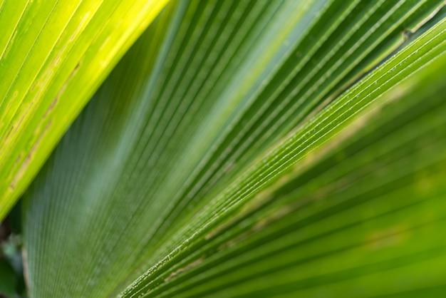 自然の植物と葉の緑の背景