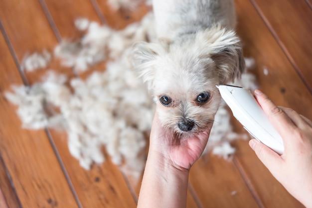 バリカンで人間によるグルーミングと散髪犬の毛皮