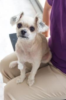 Собака сломала ногу с повязкой в ветеринарной клинике