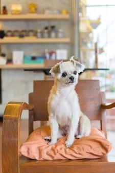 Собака так мило смешанная порода в кафе ищет что-то