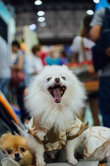 Азиатский владелец собаки и собака на выставке домашних животных