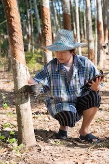 Фермер на плантации каучукового дерева