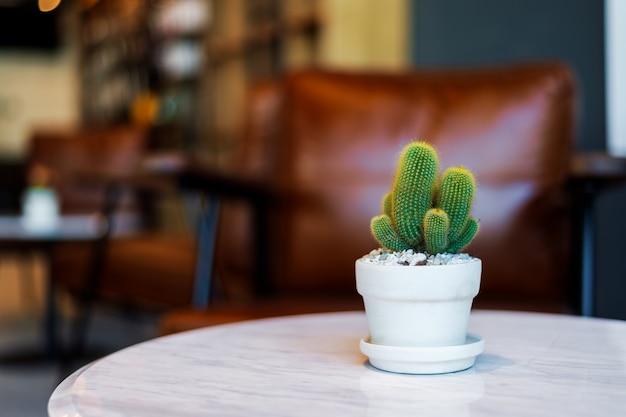 Кактус крупным планом в кафе