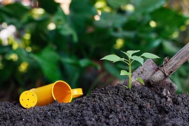 Посадка небольшого растения на кучу почвы