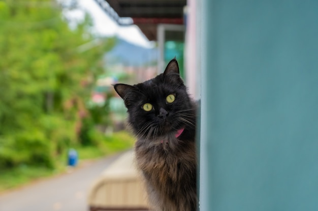 猫は私を見て